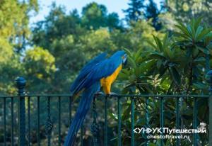 Попугай-в-парке-верхний-дюден